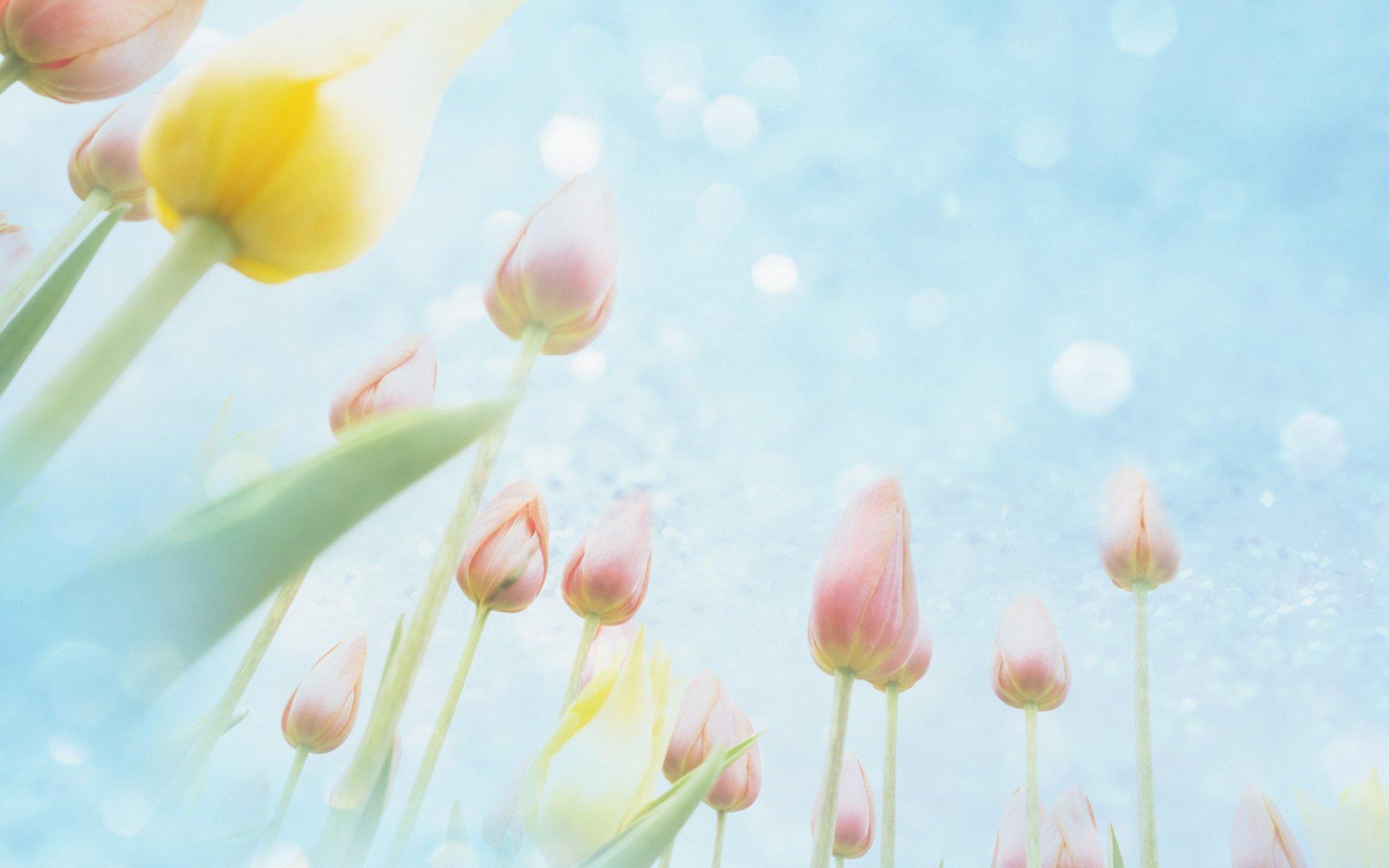 flowerartunsprouttulip11920x1200.jpg